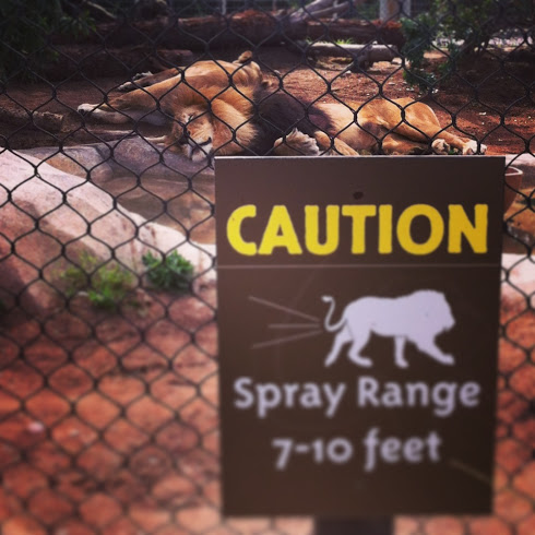 lion spray