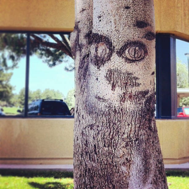 tree face instagram