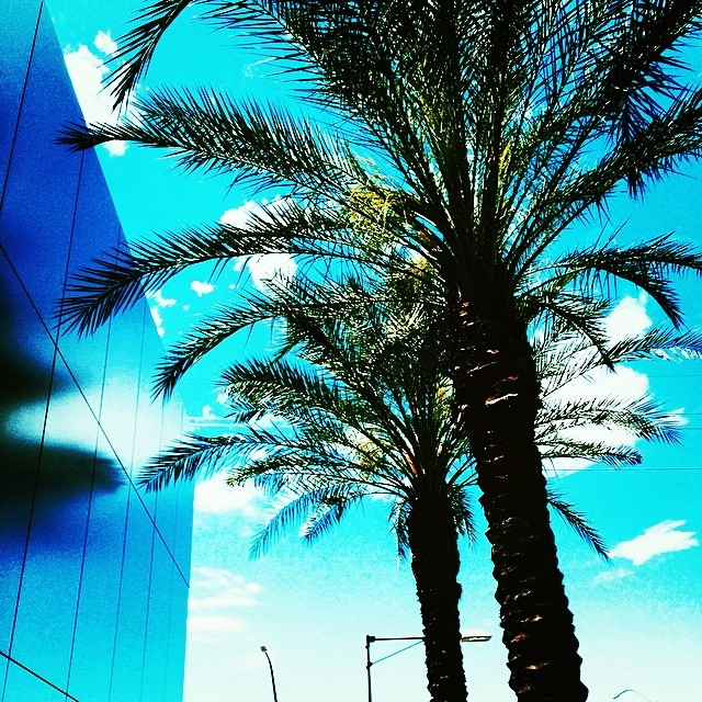 palm trees instagram @yayitswee