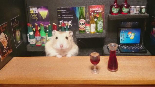 hamster bar